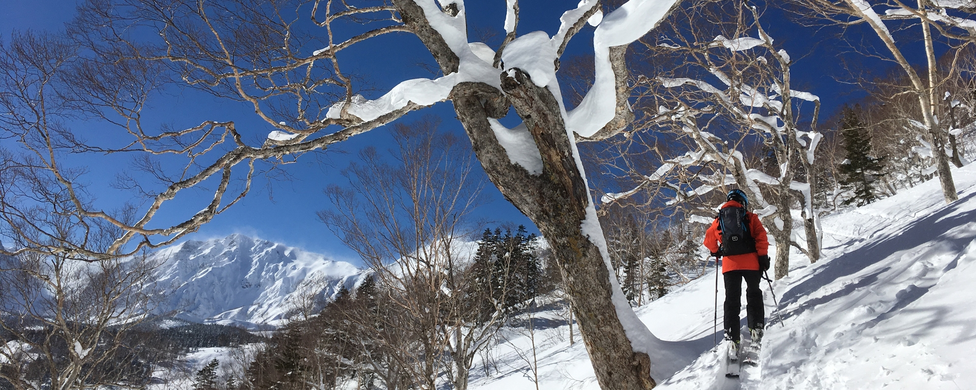 Tsugaike Backcountry